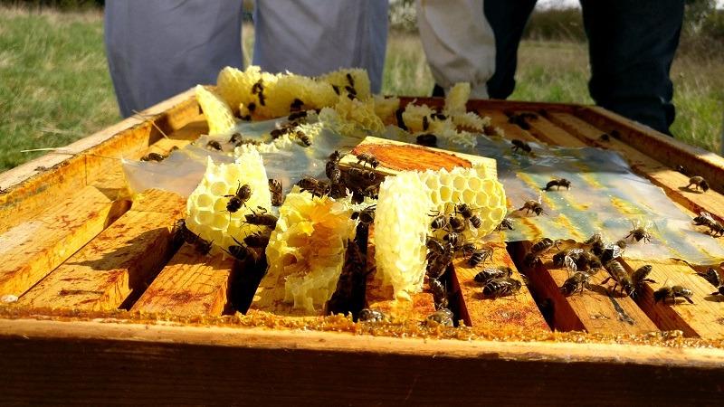 Miel cadrans abeilles publication innutswetrust