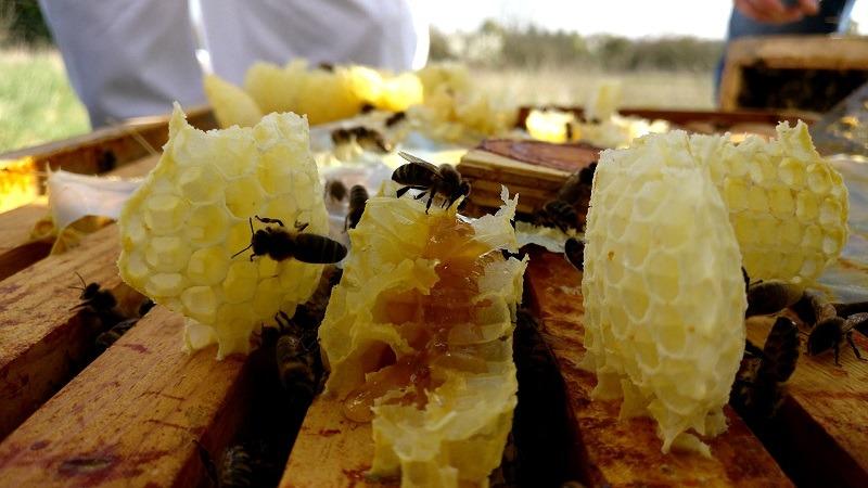 Miel ruche abeilles publication innutswetrust