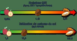 Cacao filière