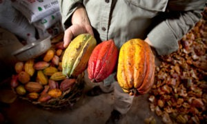 Cacao présentation multicolore publication innutswetrust