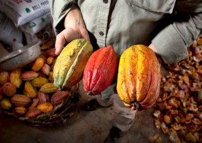 Cacao et chocolat : infographie