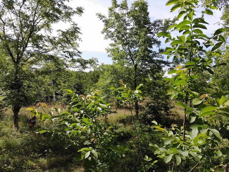 Forêt de feuillus en Corrèze