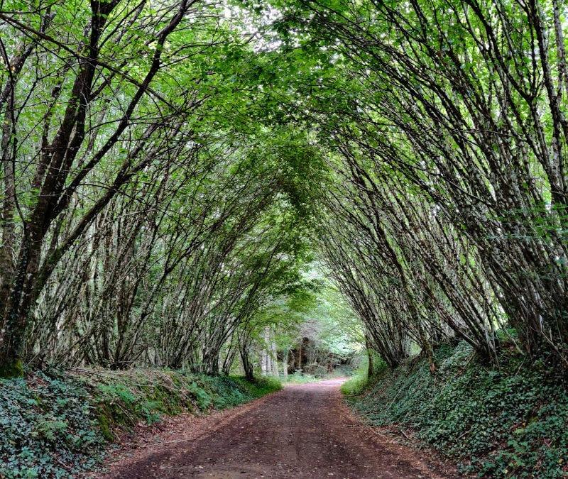 L'arbre qui cache la forêt