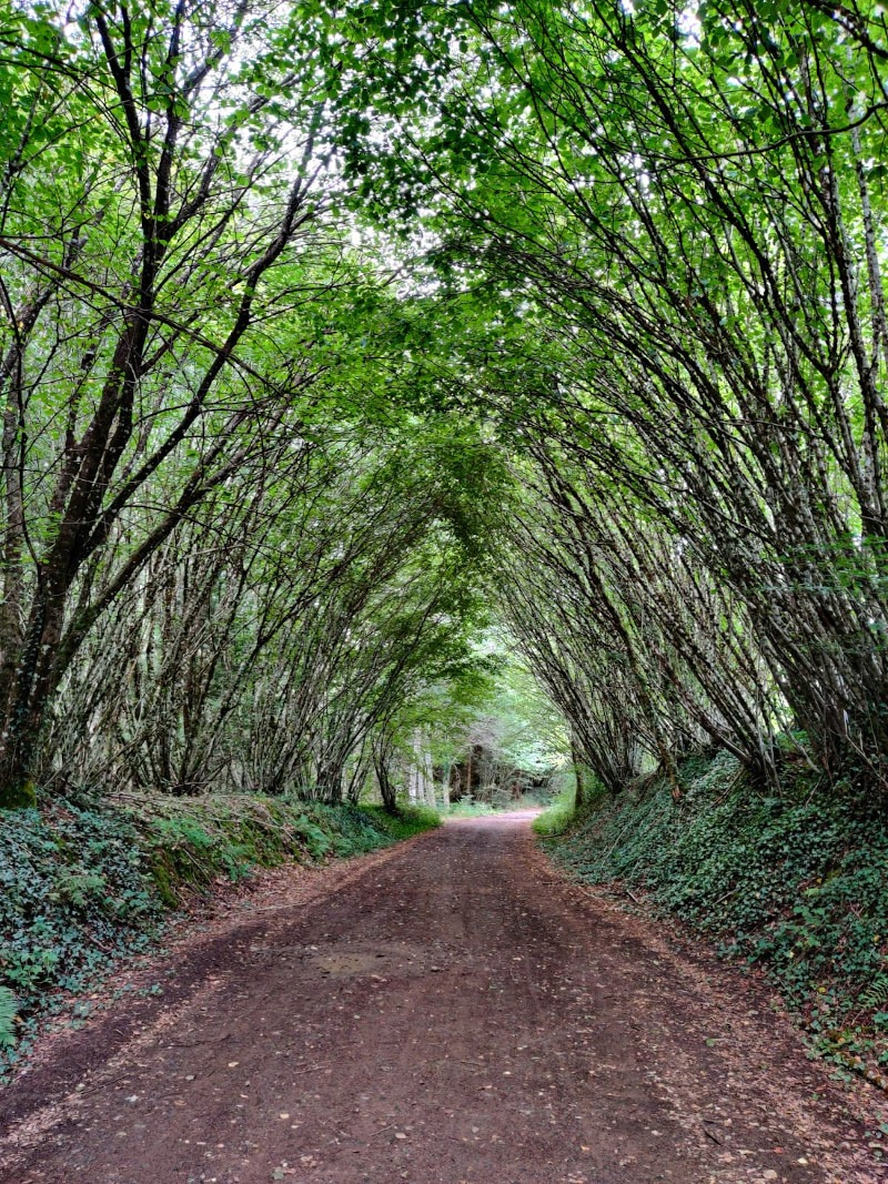 Passage emblématique forêt de feuillus en Corrèze