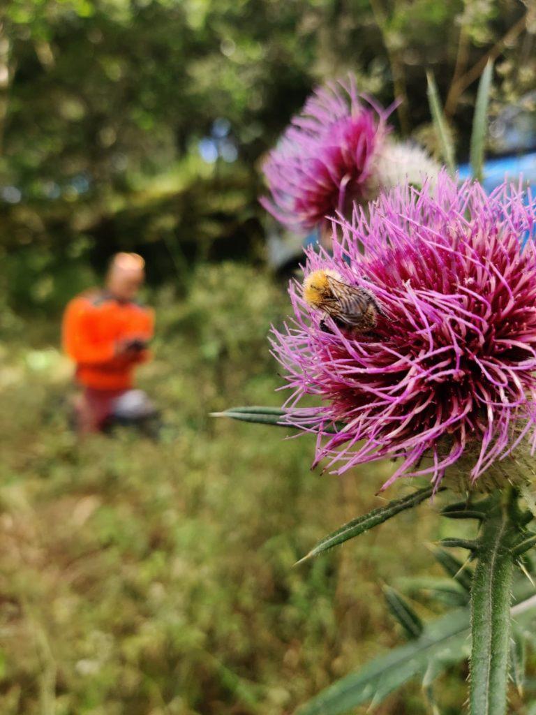 Biodiversité au milieu d'une forêt de feuillus en Corrèze