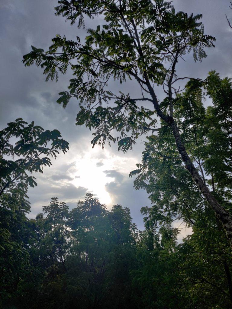 Une belle éclaircie dans une forêt Corrézienne